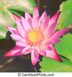 Lotus flower on the water with retro filter effect