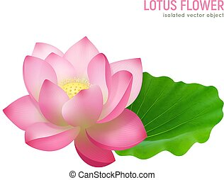 Lotus Flower Realistic