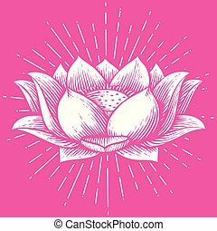 lotus flower - vintage engraved vector illustration (hand drawn style)
