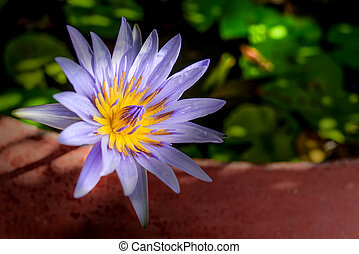 Lotus flower with depth of field.