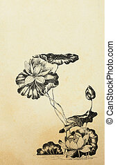 Lotus flowers in art nouveau style on old paper