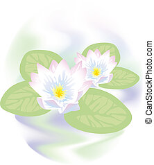 Lotus flowers in water.