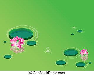 Lotus flowers (waterlily)
