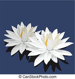 lotus, is, osamocený, dále, oplzlý grafické pozadí