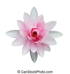 Lotus isolated on white