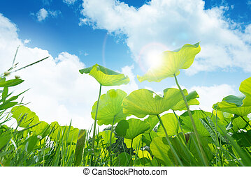 Lotus leaf against blue sky