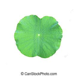 Lotus leaf isolated on white background.