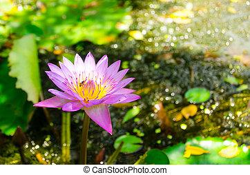 Dessert of lotus root white lotus flower mightylinksfo