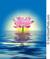 Lotus Reflection - Lotus reflects person's figure in water. ...