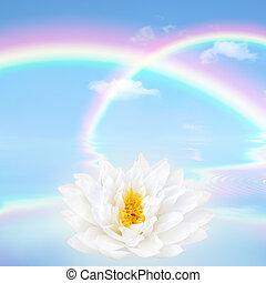 lotus, regenboog, bloem, lelie