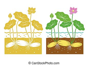 Pink lotus flower vector isolated pink lotusvector illustration lotus root with leaves and lotus flower mightylinksfo