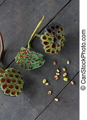 Lotus seed pod and seeds from each sheep