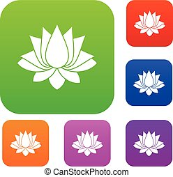 Lotus set color collection