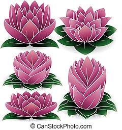 Lotus Set Colored 2 - illustration of colored set of lotus