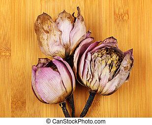 lotus, tillsluta, död