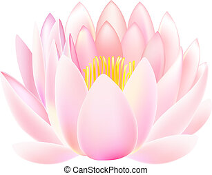 Lotus - Vector illustration of lotus isolated on white ...