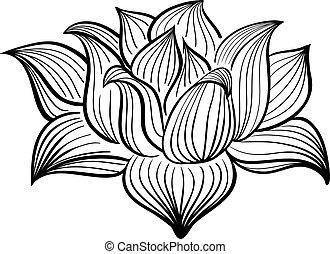 lotus, witte bloem, black , vector