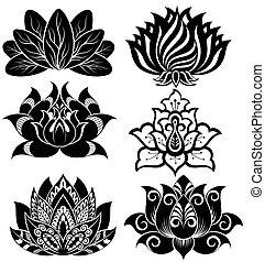 lotuses, ensemble, illustration