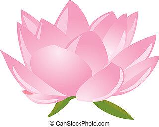 lotus(waterlily) vector