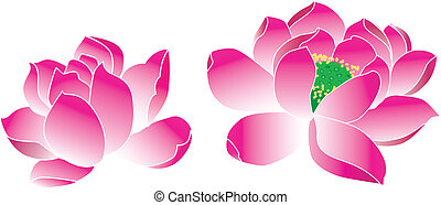 lotus(waterlily) - lotus waterlily,