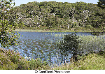 Lough Leane, Killarney National Park, County Kerry, Ireland