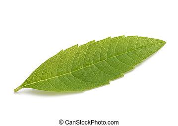 Louisa Herb leaf