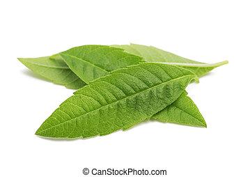 Louisa Herb leaves
