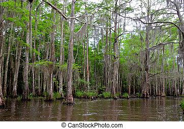 Louisiana Bayou - Swamps of a Louisiana Bayou