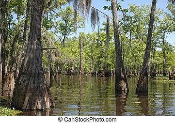 Louisiana Bayou on a sunny spring day