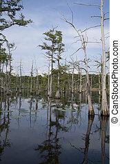 Louisiana Bayou - Line of trees growing within a Louisana...
