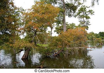Louisiana swamp bayou - A Louisiana swamp/bayou