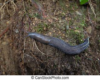 loupat, snail), blátivý, (no, ponurý, slimák, pozemek