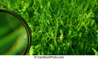 loupe moving across green grass background