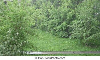 lourd, été, averse, nature, park., jour