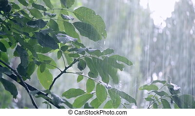 lourd, chute de pluie, averse, ondée, douche pluie, daytime., vient