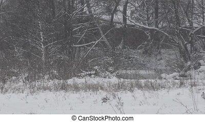 lourd, chute neige, (storm)