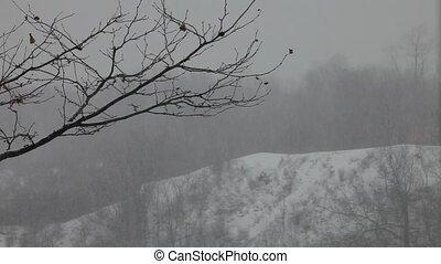 lourd, forêt, hd, neiger orage