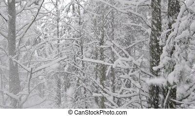 lourd, hiver, bois, neige, forêt, orage, automne, pays merveilles