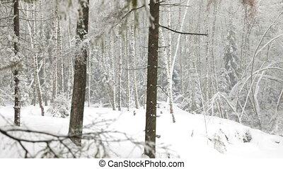 lourd, hiver, chute neige, forêt
