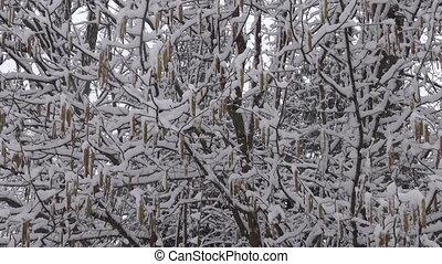 lourd, neige, tomber, forêt
