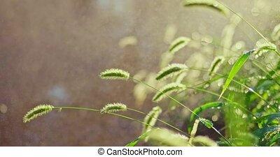 lourd, pleuvoir, coup, parc, foyer, pluie, sélectif, herbe, summer.