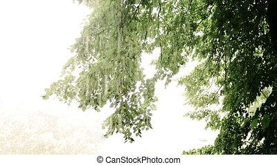lourd, pleuvoir, forêt