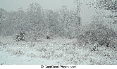 lourd, secteur boisé, neige, petit, tomber, cabine