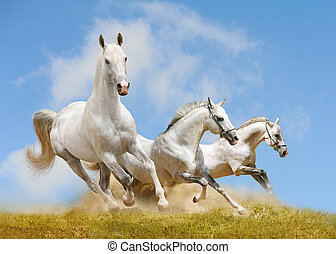 lovak, fehér