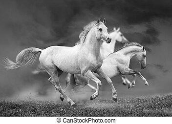 lovak, futás