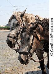 lovak, kocsi