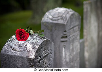 Love and Loss - A red Rose sits on top of a headstone in a...