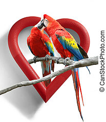 A couple of kissing parrots with a heart-shaped frame as background