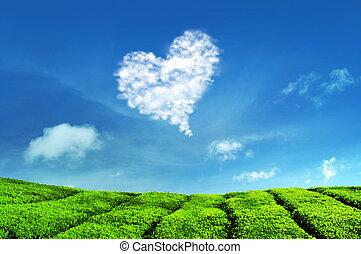Love Cloud and Tea Plantations at Cameron Highlands...