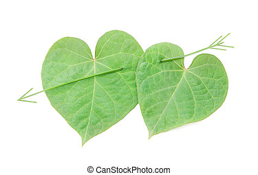 love concept: pair of hearts from leaves for happy valentine...